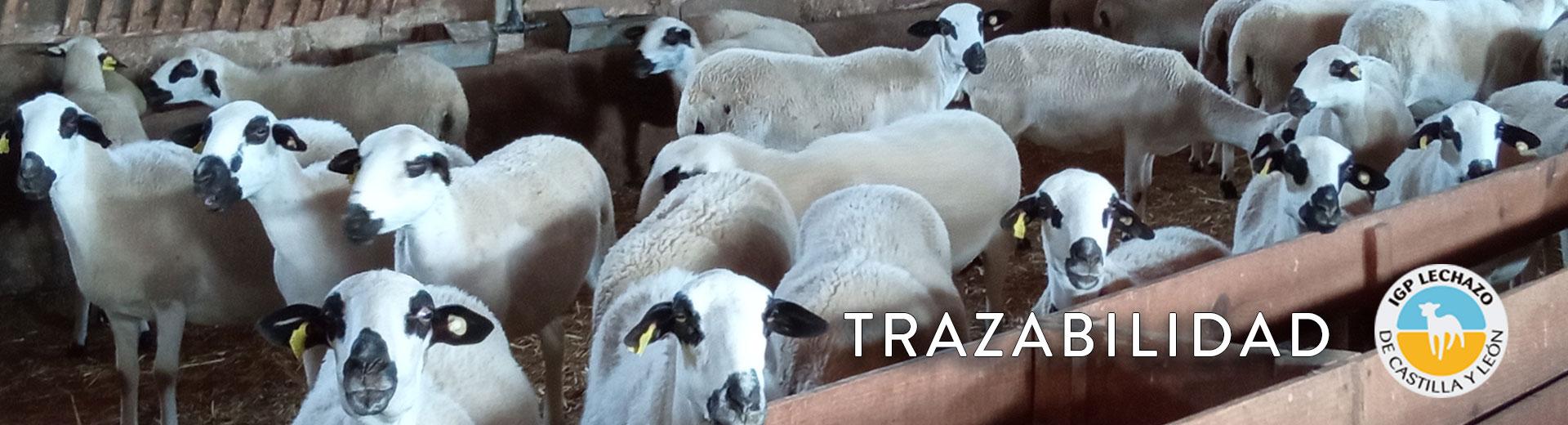 Proceso de Trazabilidad IGP Lechazo de Castilla y León